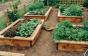learn_raised_bed_garden