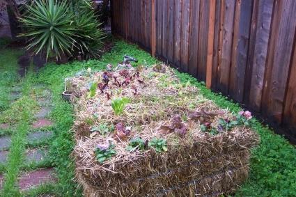 straw-bale-gardening